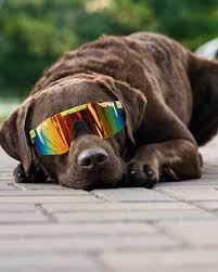 Pit Viper: the Best Deals on Stylish Sunglasses